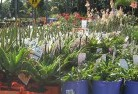 Araluen NSW Plants 69