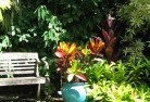Araluen NSW Tropical landscaping 11