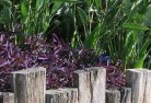 Araluen NSW Tropical landscaping 3
